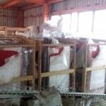 Пеллетные котлы на складе